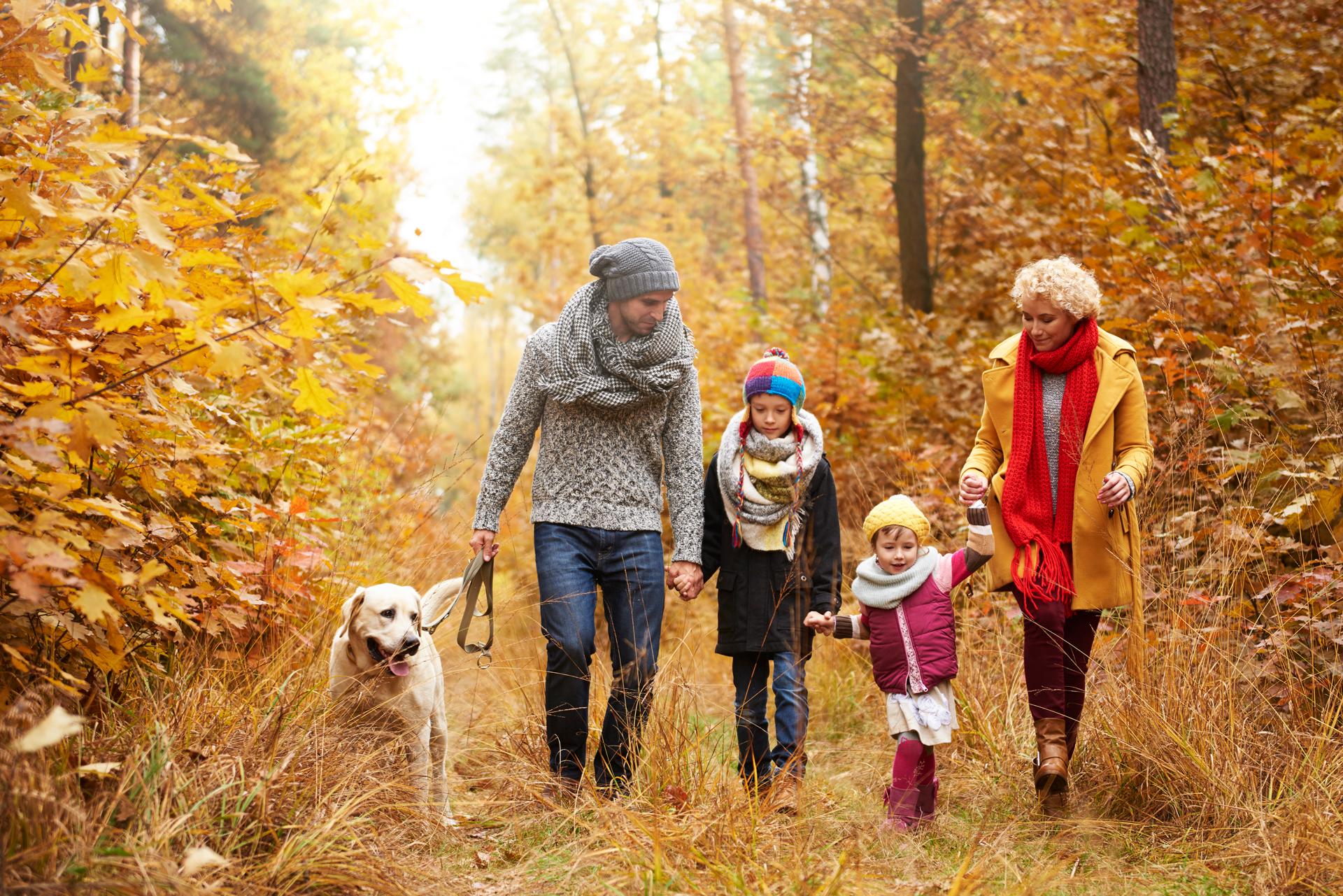 Animais como família