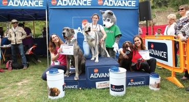 Torres Pet organiza desfile